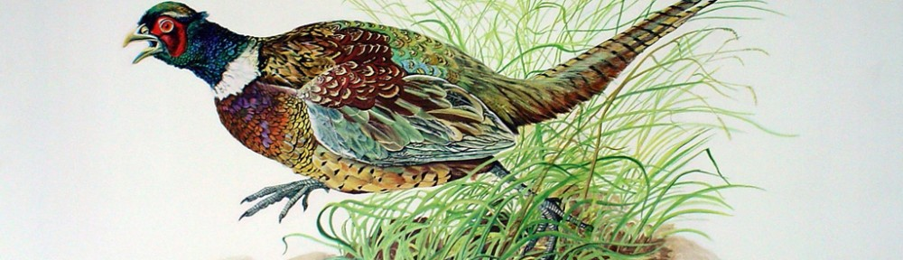 Cock Pheasant by Michael Anthony Antonoplos