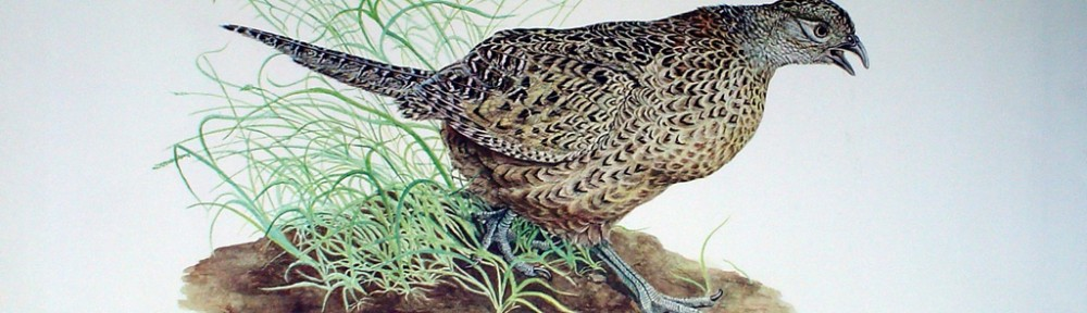 Hen Pheasant by Michael Anthony Antonoplos