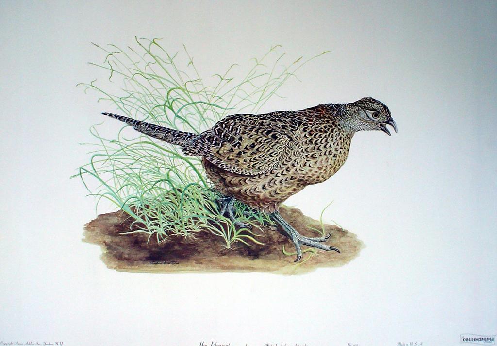 Hen Pheasant by Michael Anthony Antonoplos