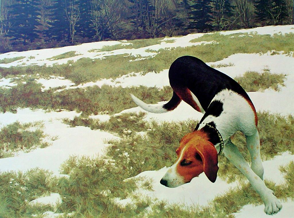 Hound In Field by Alex Colville