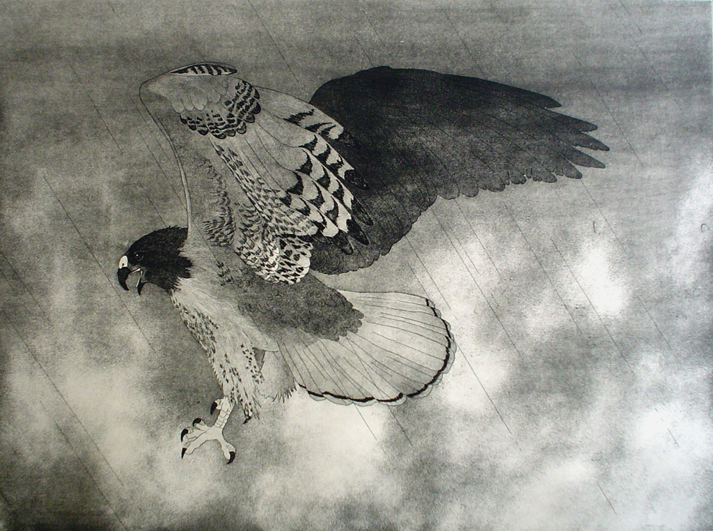Red-Tailed Hawk by Nancy Leslie - original etching, signed and numbered edition of 150