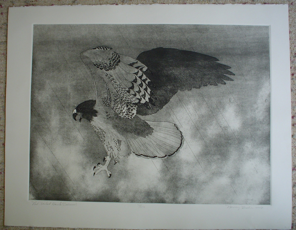 Red-Tailed Hawk by Nancy Leslie, shown with full margins - original etching, signed and numbered edition of 150