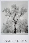Oak Tree Snowstorm Yosemite by Ansel Adams - offset lithograph fine art poster print