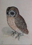 Owl, 1508 by Albrecht Dürer - authentic Albertina Museum collectible collotype fine art print