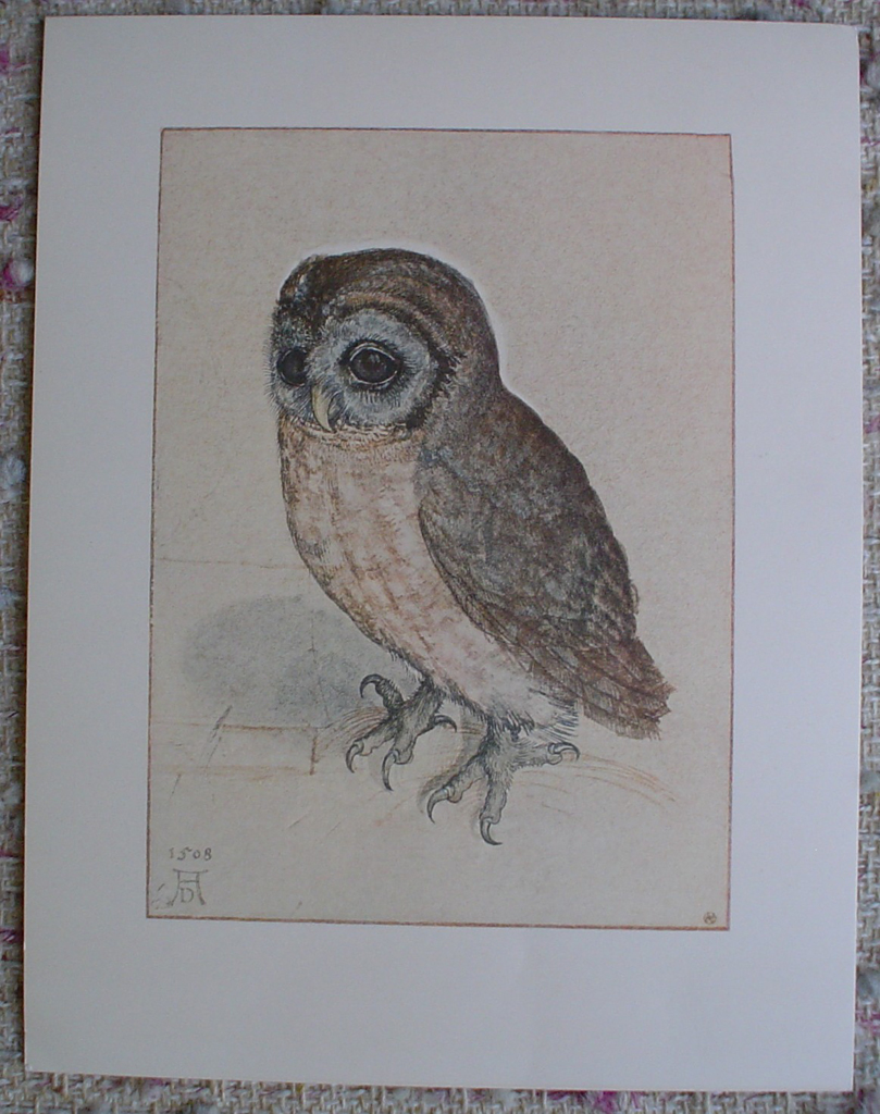 Owl, 1508 by Albrecht Dürer, shown with full margins - authentic Albertina Museum collectible collotype fine art print