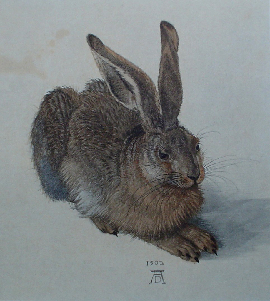 Young Hare, 1502 by Albrecht Dürer - authentic Albertina Museum collectible collotype fine art print
