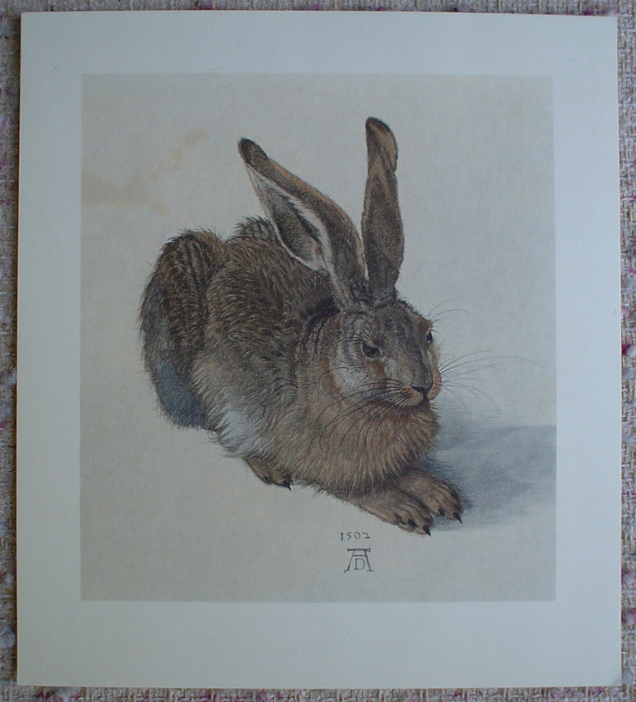 Young Hare, 1502 by Albrecht Dürer, shown with full margins - authentic Albertina Museum collectible collotype fine art print