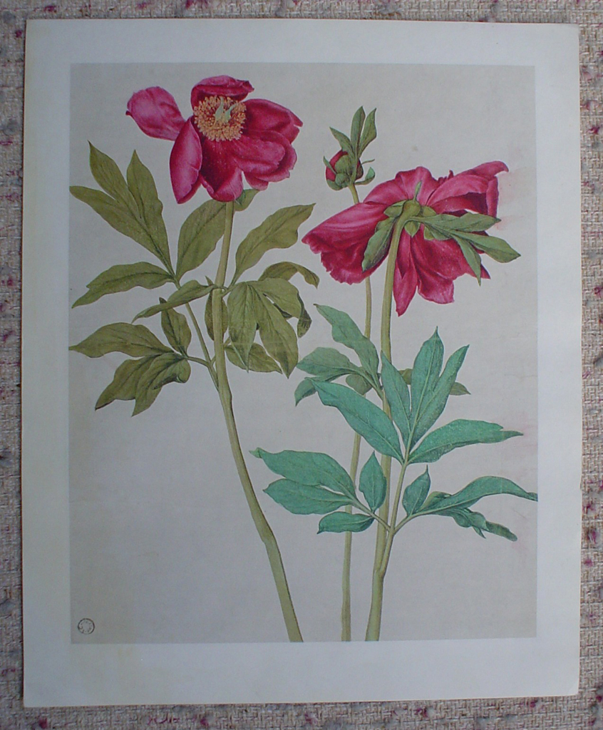 Peonies Red Flowers by Albrecht Dürer, shown with full margins - authentic Albertina Museum collectible collotype fine art printcollotype fine art print