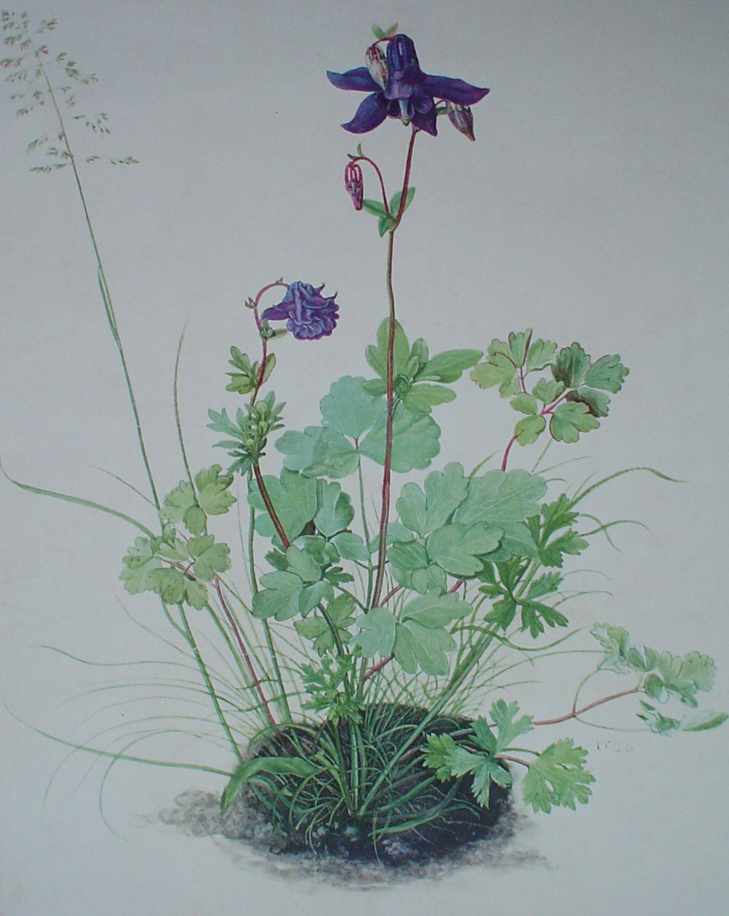 Columbine by Albrecht Dürer - authentic Albertina Museum collectible collotype fine art print