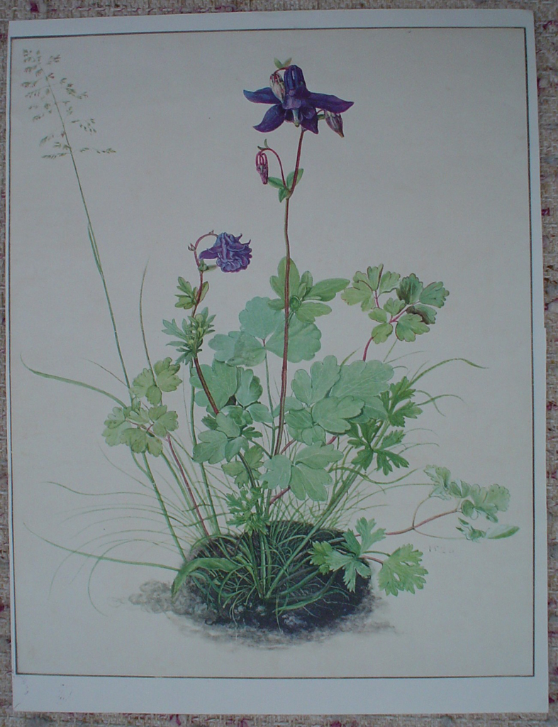 Columbine by Albrecht Dürer, shown with full margins - authentic Albertina Museum collectible collotype fine art print