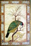 Himalayan Blue-Throated Berbet by unknown artist, UNESCO print - offset lithograph fine art print
