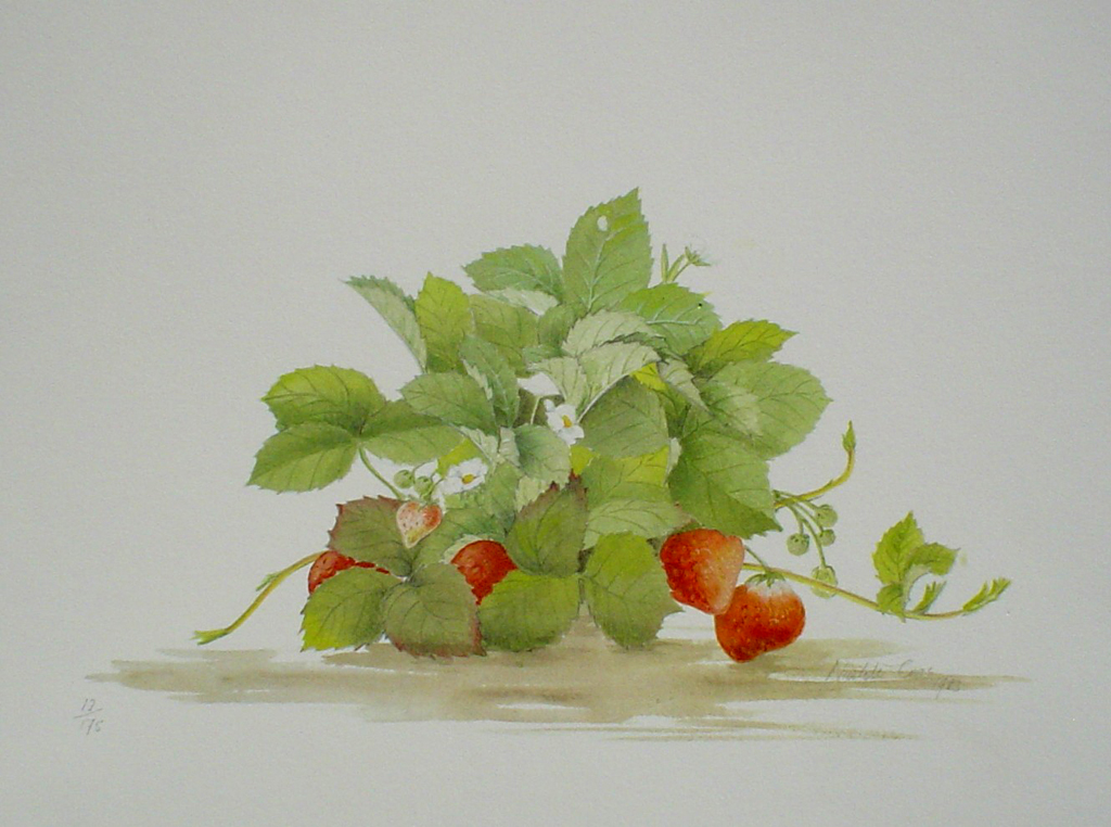 Strawberries by Nicolette Cross, signed by artist and numbered 12/175 - offset lithograph limited edition fine art print