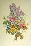 Mixed Flowers Roses Lilacs by Jean-Louis Prevost - restrike etching, handcoloured original print