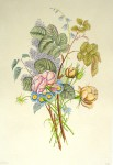 Flowers Lilacs Roses by Jean-Louis Prevost - restrike etching, handcoloured original print