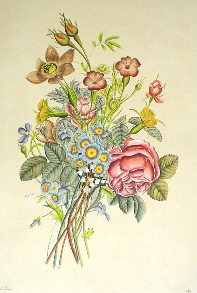 Flowers Rose Buds by Jean-Louis Prevost - restrike etching, handcoloured original print