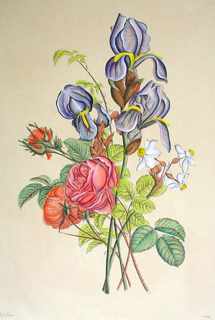 Mixed Flowers Iris by Jean-Louis Prevost - restrike etching, hand-coloured original print