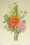 Mixed Flowers Poppy by Jean-Louis Prevost - restrike etching, hand-coloured original print