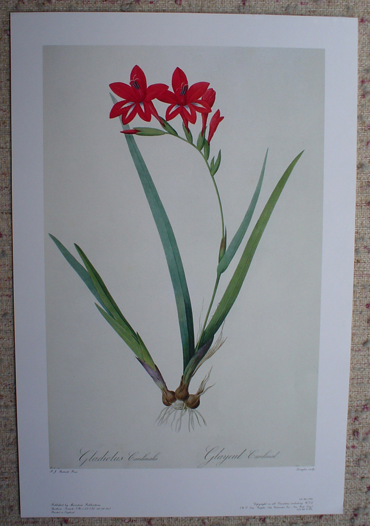 Botanical, Gladiolus Cardinalis by Pierre Joseph Redoute, shown with full margins - offset lithograph fine art print