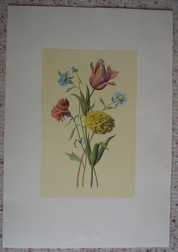Botanical, Mixed Flowers Striped Tulip by unknown artist, shown with full margins - restrike etching, hand-coloured original print