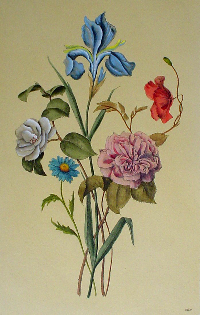 Botanical, Mixed Flowers Iris by unknown artist - restrike etching, hand-coloured original print