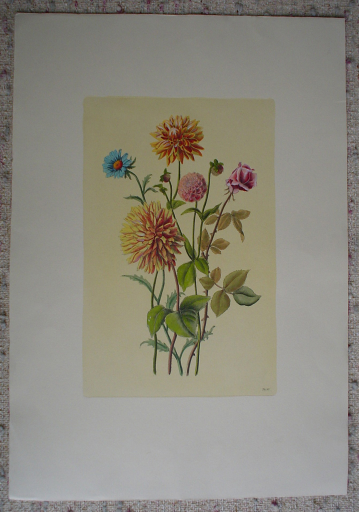 Botanical, Mixed Flowers Dahlia by unknown artist, shown with full margins - hand-coloured original print
