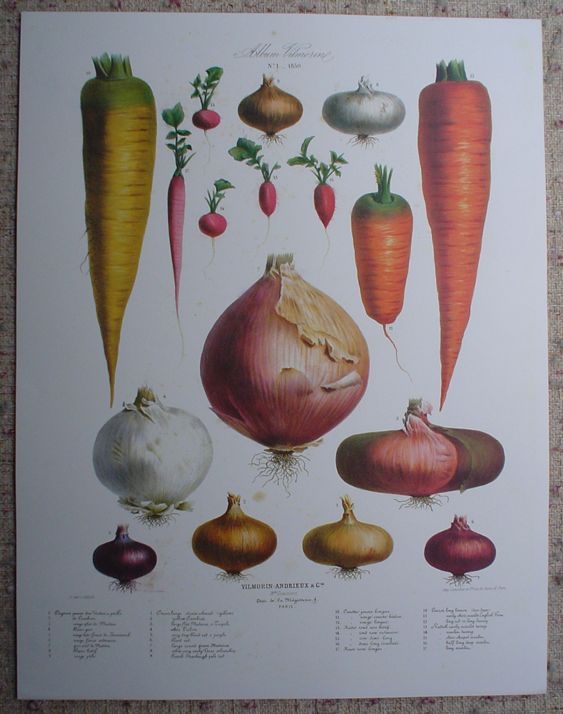 Botanical No.1,1850 Onions Carrots Radishes by Vilmorin Seed Co, shown with full margins - offset lithograph fine art print