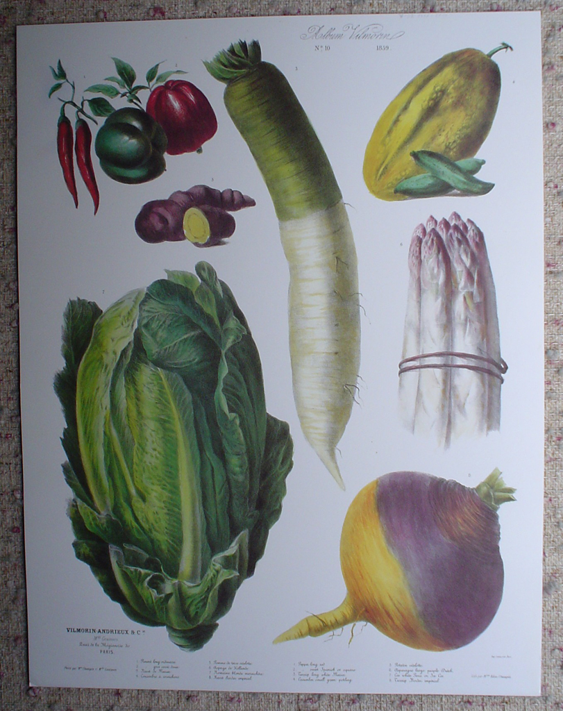 Botanical No.10,1859 Cucumber Asparagus Turnip Pepper Potato Lettuce by Vilmorin Seed Co, shown with full margins - offset lithograph fine art print