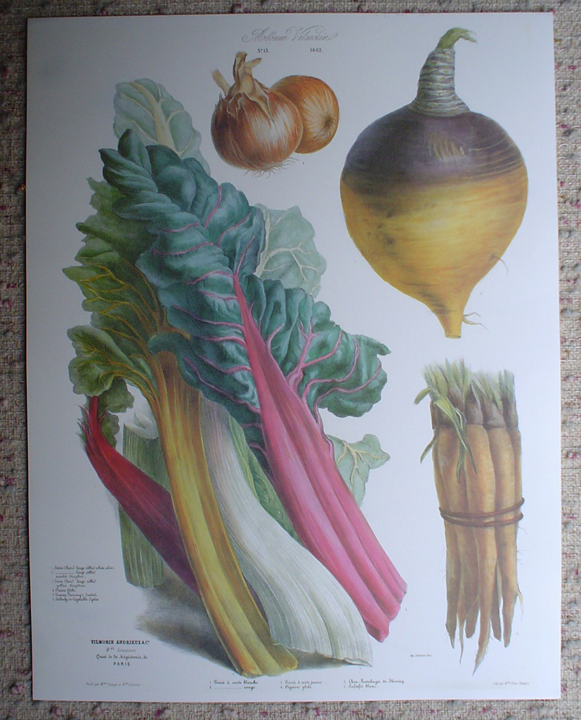 Botanical No.13,1862 Swiss Chard Vegetable Oyster Turnip Onion by Vilmorin Seed Co, shown with full margins - offset lithograph fine art print