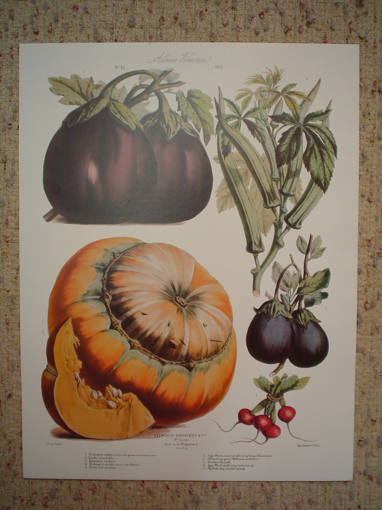 Botanical No.23,1871 Eggplant Squash Radish Okra by Vilmorin Seed Co, shown with full margins - offset lithograph fine art print