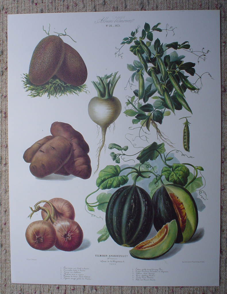 Botanical No.26,1875 Melon Potato Turnip Peas Cucumber by Vilmorin Seed Co, shown with full margins - offset lithograph fine art print