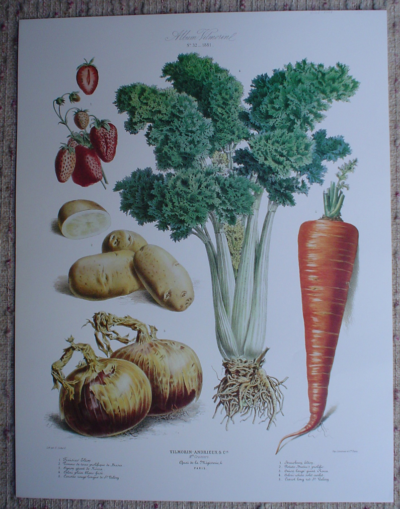 Botanical No.32,1881 Strawberry Celery Carrot Onion Potato by Vilmorin Seed Co, shown with full margins - offset lithograph fine art print