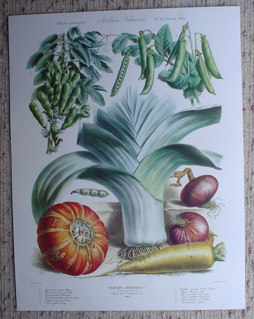 Botanical No.34,1883 Squash Leek Peas Onion Carrot by Vilmorin Seed Co, shown with full margins - offset lithograph fine art print