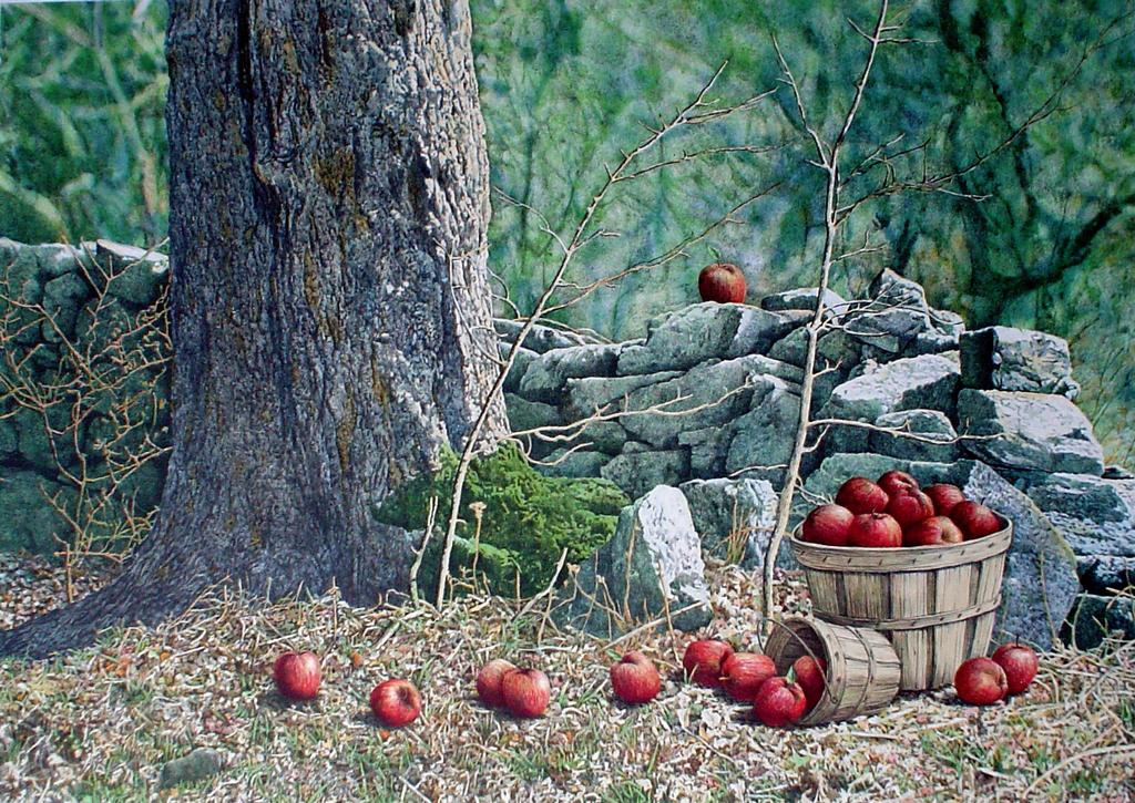 Windfalls, Apple Basket by Helen Rundell - original lithograph, signed
