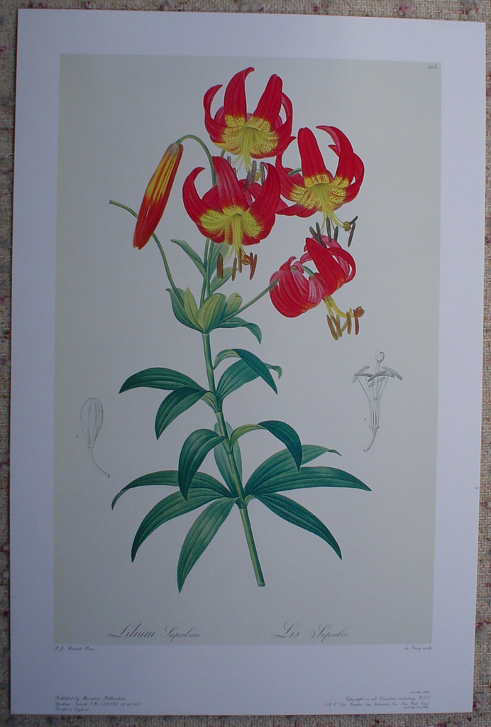 Botanical, Lilium Superbum by Pierre Joseph Redoute, shown with full margins - offset lithograph fine art print