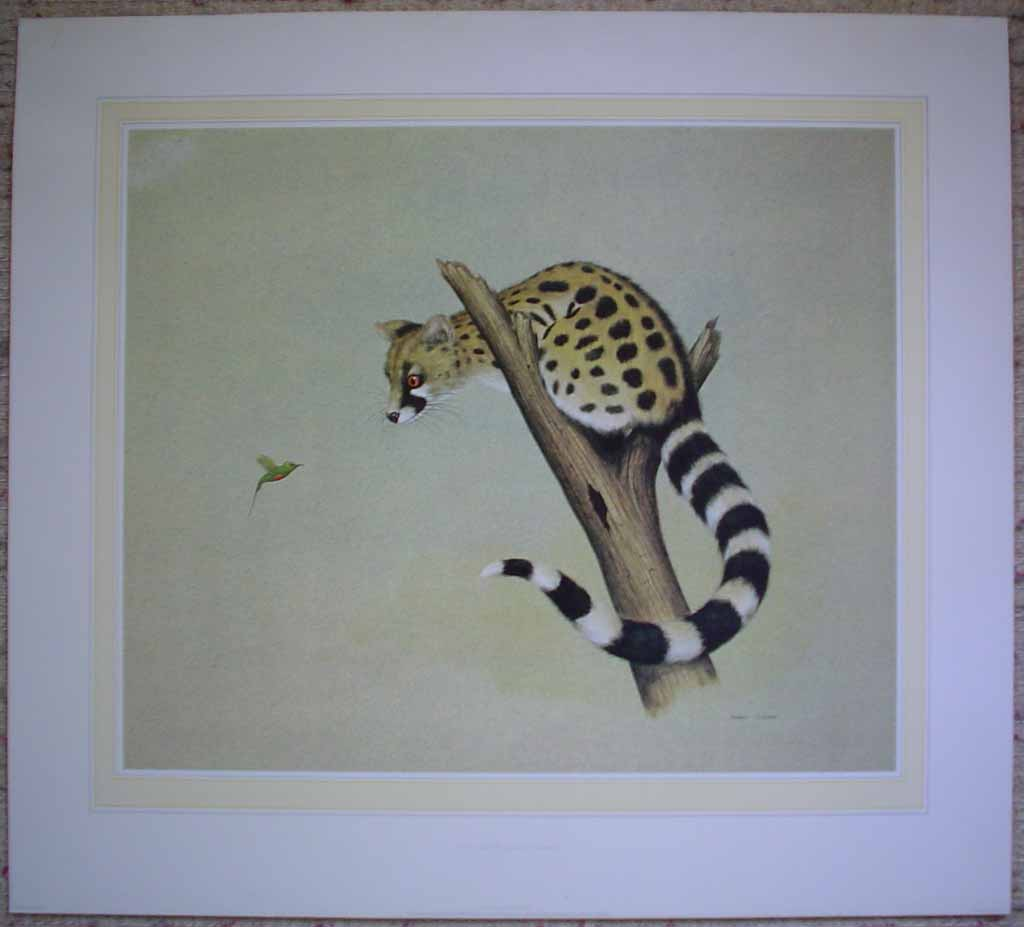 Genet And The Beautiful Sunbird by Andrew Cooper, shown with full margins - offset lithograph reproduction vintage fine art print