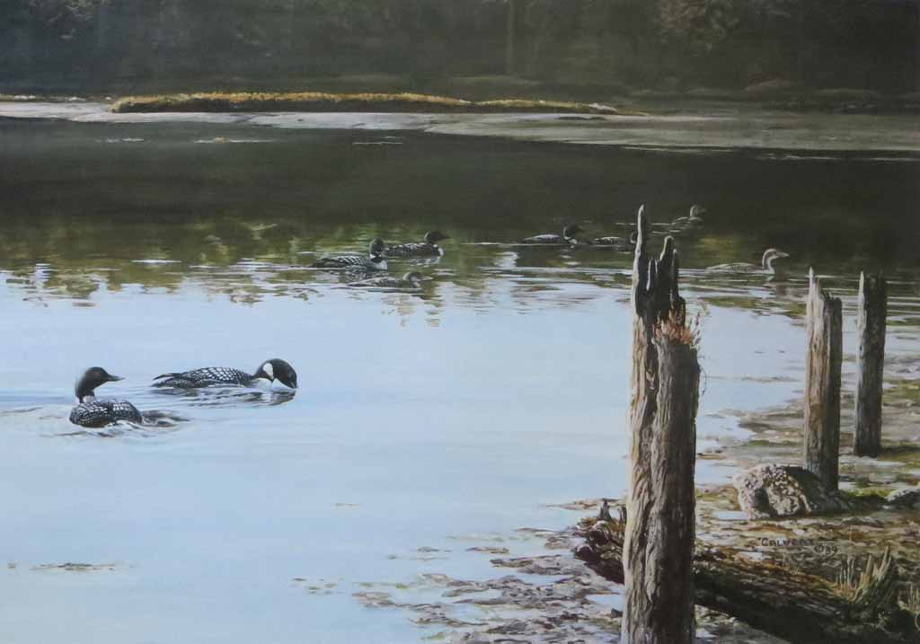 Swimming Canada Geese (untitled) by Lissa Calvert - offset lithograph reproduction vintage fine art print