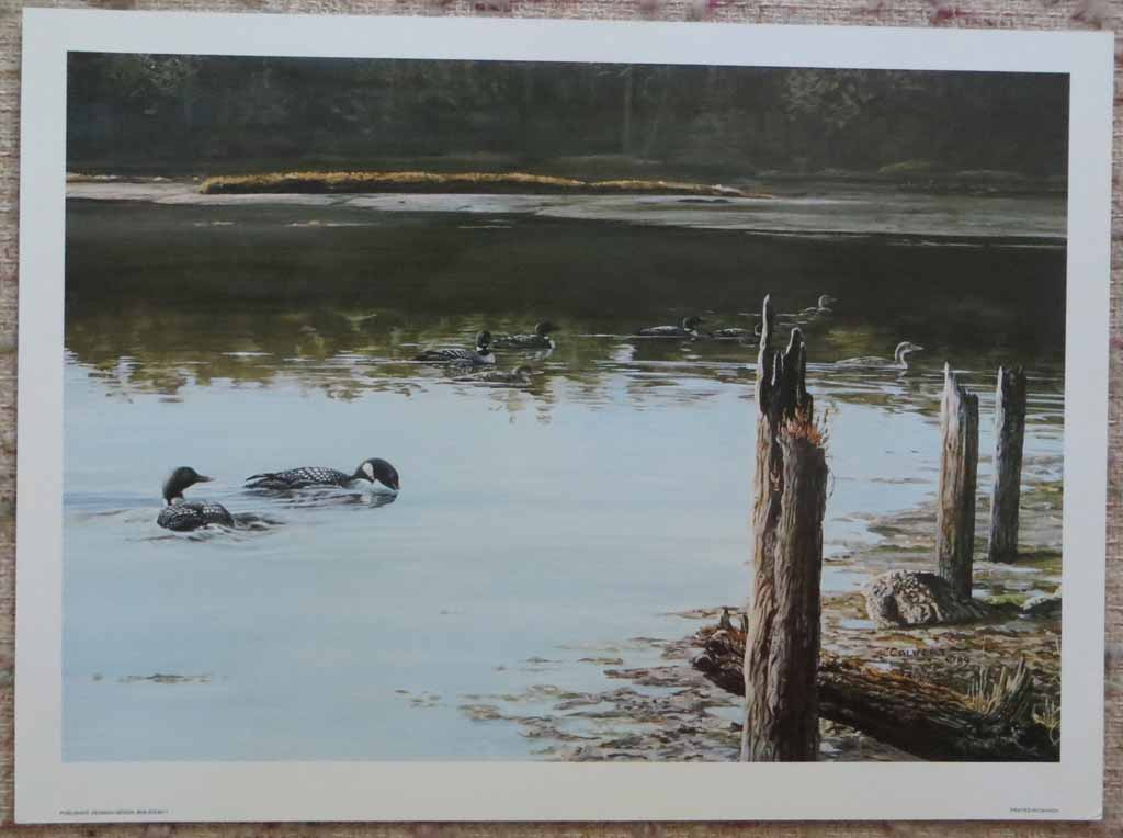 Swimming Canada Geese (untitled) by Lissa Calvert, shown with full margins - offset lithograph reproduction vintage fine art print
