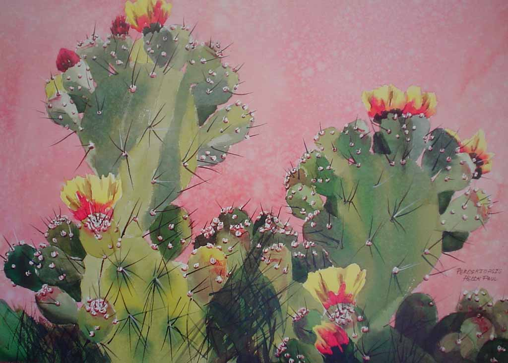 Pereskiopsis, Flowering Cactus by Helen Paul - offset lithograph reproduction vintage poster art print