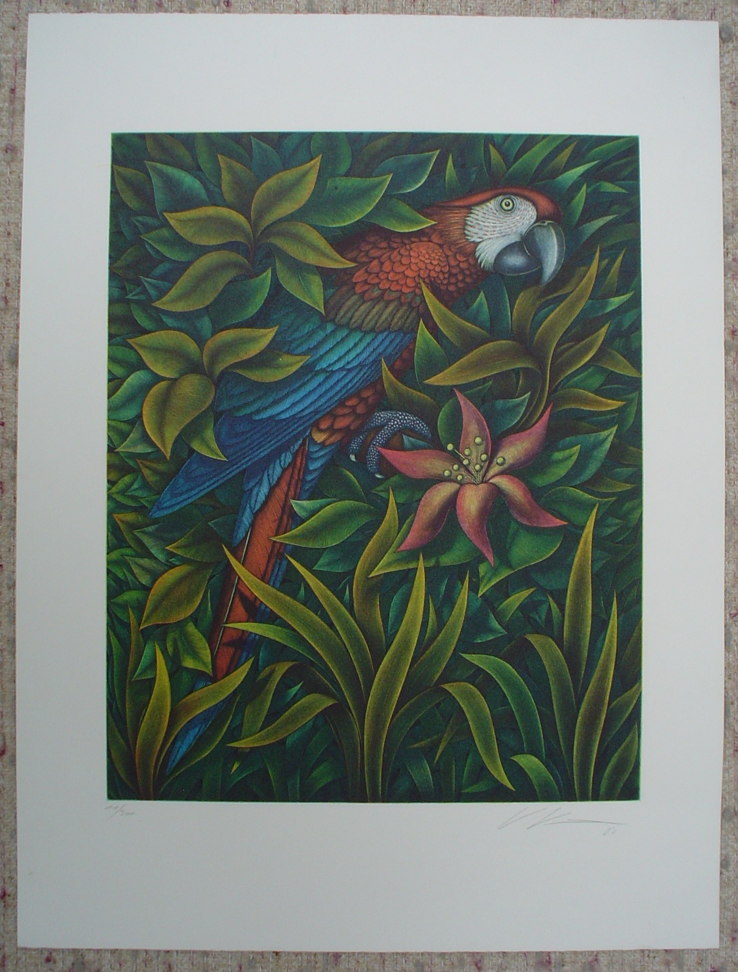 Macaw by Volker Kuehn, shown with full margins - original hand-coloured etching - numbered 11/300, signed and dated in pencil by artist