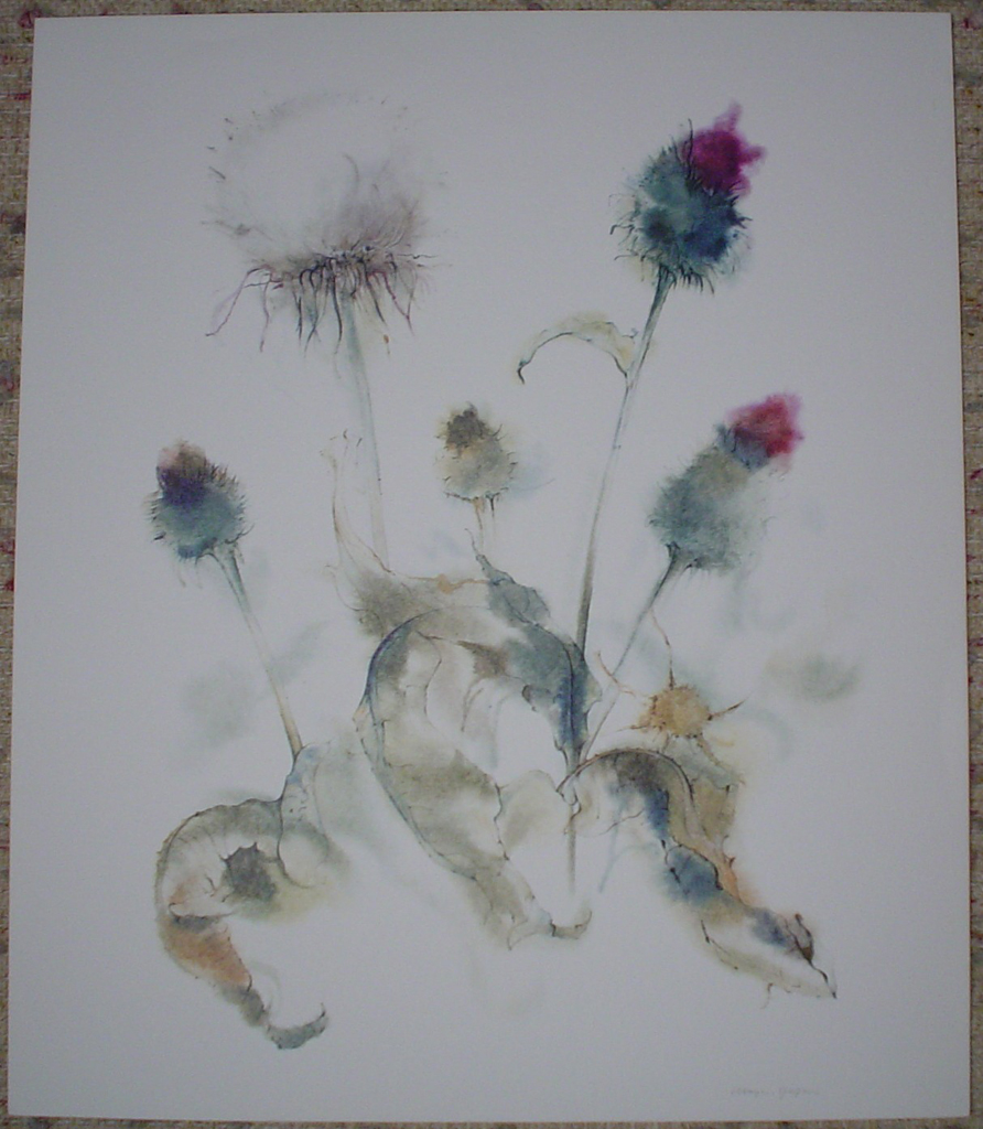 """""""White Thistle"""" by Klaus Meyer Gasters, shown with full margins - vintage 1970's/1980's offset lithograph reproduction watercolour collectible fine art print (size approx. 18.5 x 15 inches/ ca. 47 x 38 cm) - KerrisdaleGallery.com"""
