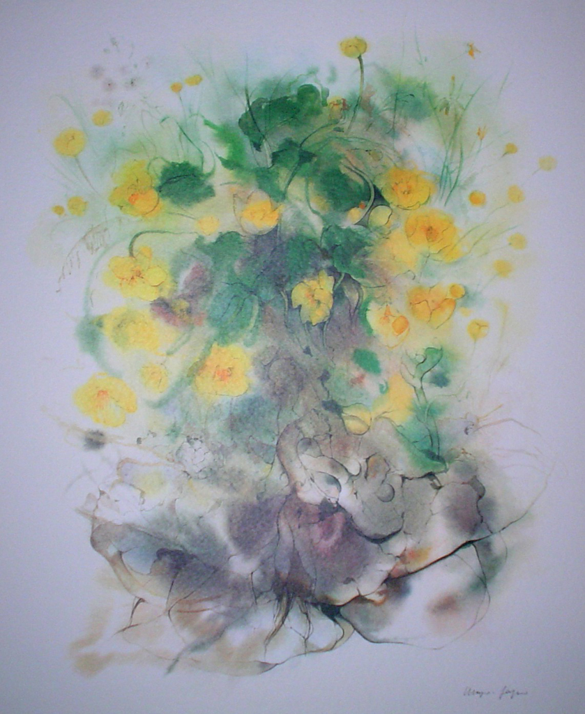 """Yellow Buttercups, Marsh Marigolds"", in German: ""Sumpfdotterblumen"" by Klaus Meyer Gasters - vintage 1970's/1980's offset lithograph reproduction watercolour collectible fine art print (size approx. 18.5 x 15 inches/ ca 47 x 38 cm) - KerrisdaleGallery.com"