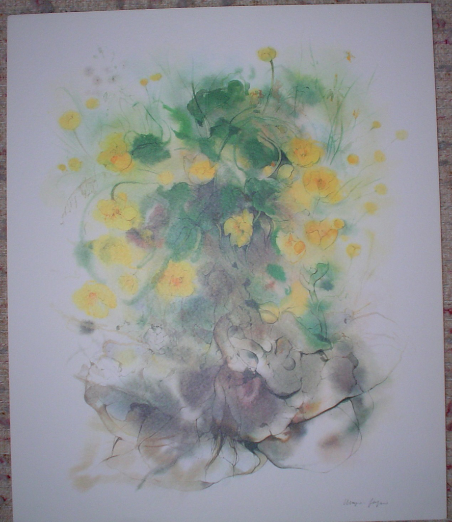 """Yellow Buttercups, Marsh Marigolds"", in German: ""Sumpfdotterblumen"" by Klaus Meyer Gasters, shown with full margins - vintage 1970's/1980's offset lithograph reproduction watercolour collectible fine art print (size approx. 18.5 x 15 inches/ ca 47 x 38 cm) - KerrisdaleGallery.com"