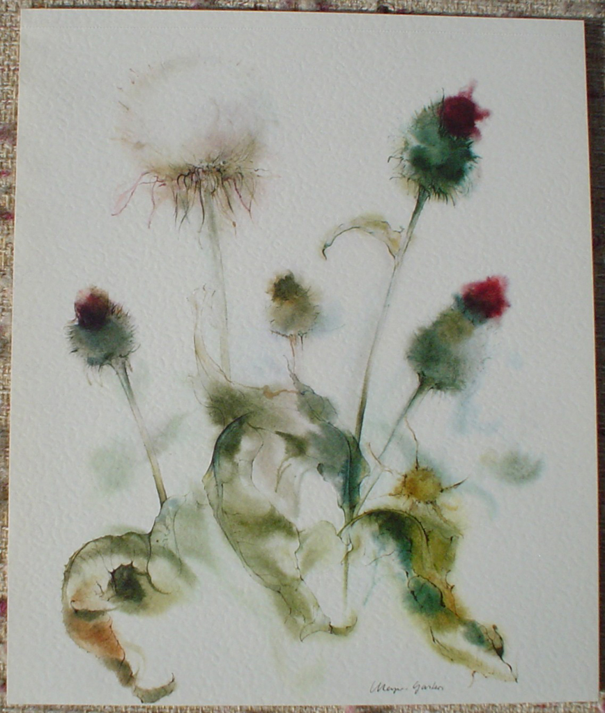 """White Thistle"" by Klaus Meyer Gasters, shown with full margins - vintage 1977 offset lithograph reproduction watercolour collectible fine art print (size 12.5 x 10.75 inches/31.75 x 27 cm) - KerrisdaleGallery.com"