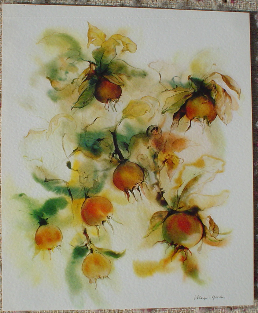 """Golden Rosehips"" by Klaus Meyer Gasters, shown with full margins - vintage 1977 offset lithograph reproduction watercolour collectible fine art print (size 12.5 x 10.75 inches/31.75 x 27 cm) - KerrisdaleGallery.com"