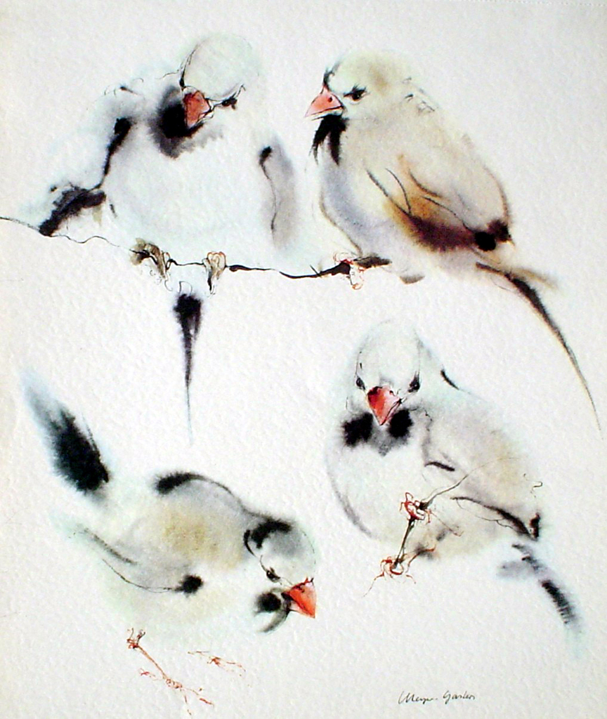 """Four Finches"" in German:""Amadinen"" by Klaus Meyer Gasters - vintage 1977 offset lithograph reproduction watercolour collectible fine art print (size 12.5 x 10.75 inches/31.75 x 27 cm) - KerrisdaleGallery.com"