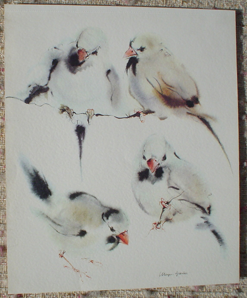 """Four Finches"" in German:""Amadinen"" by Klaus Meyer Gasters, shown with full margins - vintage 1977 offset lithograph reproduction watercolour collectible fine art print (size 12.5 x 10.75 inches/31.75 x 27 cm) - KerrisdaleGallery.com"