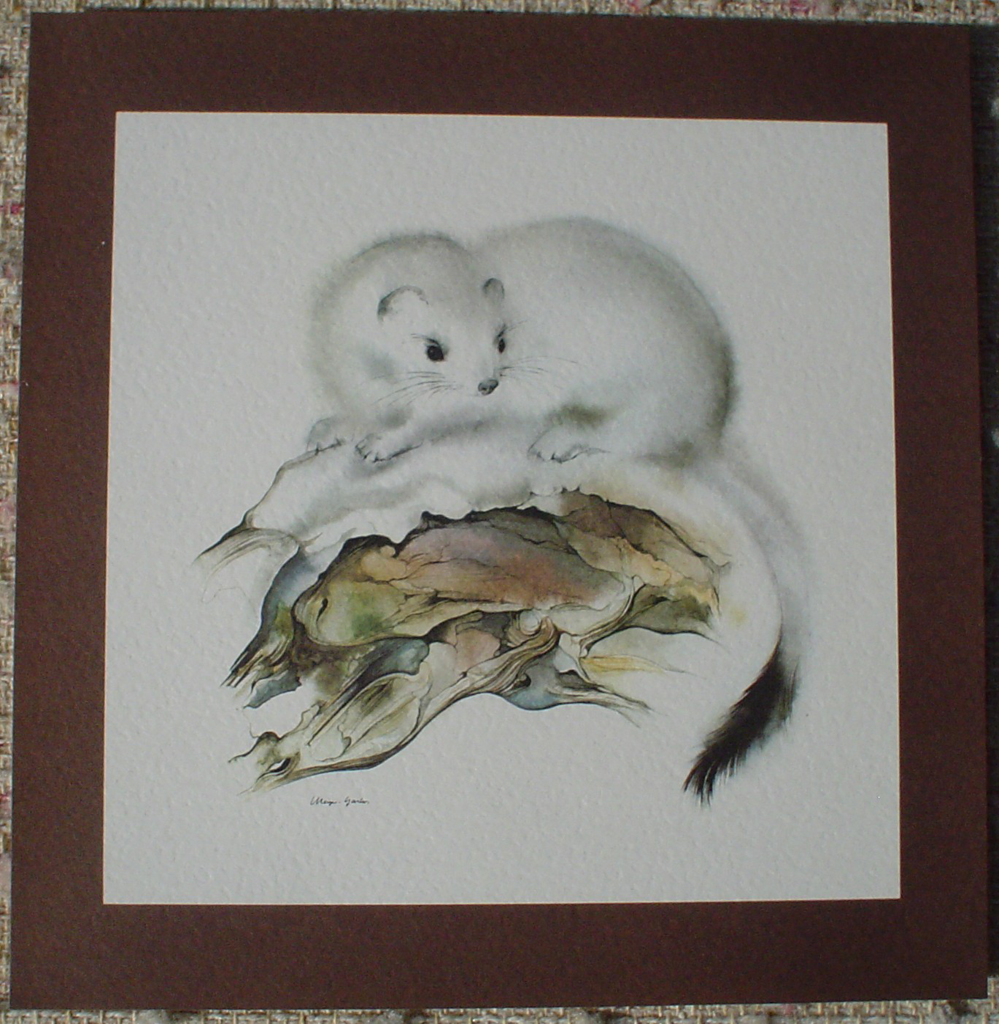 """Ermine"" in German:""Hermelin"" by Klaus Meyer Gasters, shown with full margin - vintage offset lithograph reproduction watercolour collectible art print from 1981 (size 12 x 11.5 inches/30.5 x 29.25 cm) - KerrisdaleGallery.com"