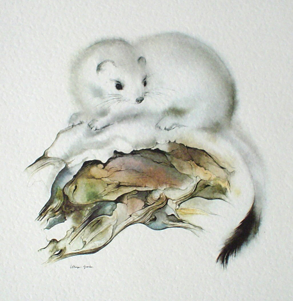 """Ermine"" in German:""Hermelin"" by Klaus Meyer Gasters - vintage offset lithograph reproduction watercolour collectible art print from 1981 (size 12 x 11.5 inches/30.5 x 29.25 cm) - KerrisdaleGallery.com"