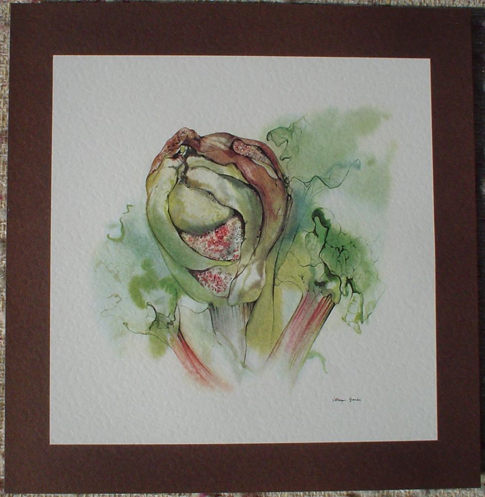 """Bud Gone To Seed"" by Klaus Meyer Gasters, shown with full margin - vintage offset lithograph reproduction watercolour collectible art print from 1981 (size 12 x 11.5 inches/30.5 x 29.25 cm) - KerrisdaleGallery.com"