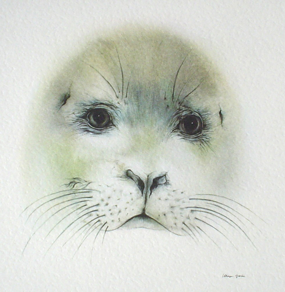 """Seal Pup Face"" by Klaus Meyer Gasters - vintage offset lithograph reproduction watercolour collectible art print from 1981 (size 12 x 11.5 inches/30.5 x 29.25 cm) - KerrisdaleGallery.com"